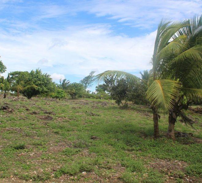 kwale south coast