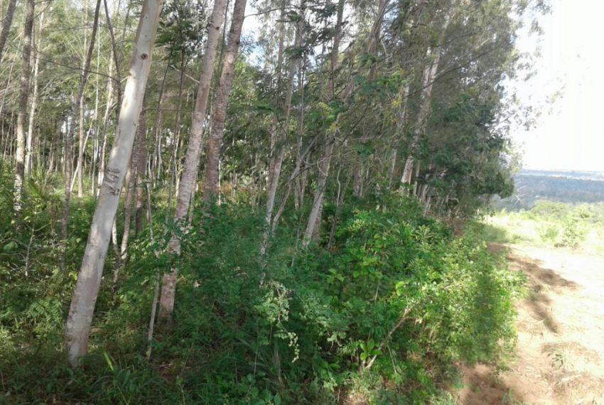 shimbahills 330 acres 3