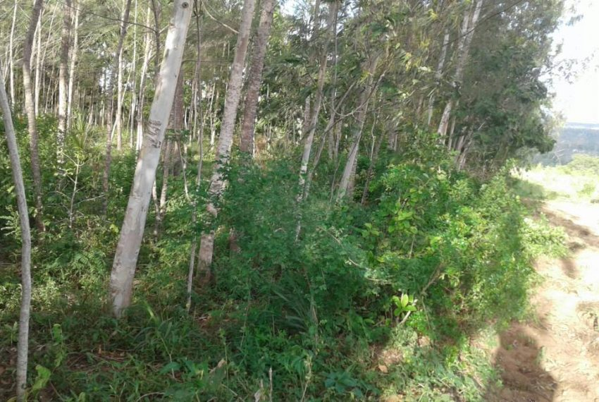 shimbahills 330 acres 5