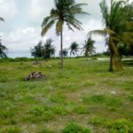 13.34 Acre Beach Plot, Malindi