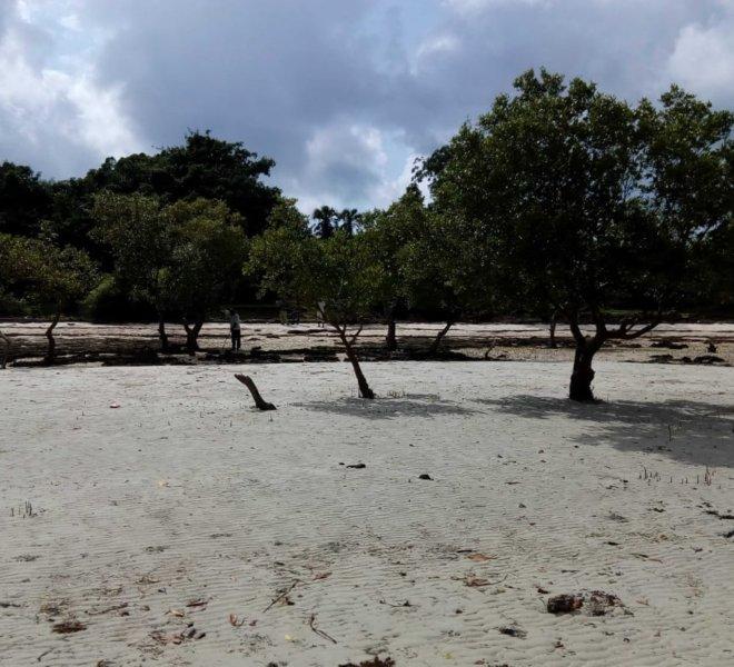 6 Acres, Funzi Island